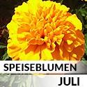Blüten im Juli