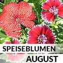 Blüten im August