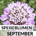 Blüten im September