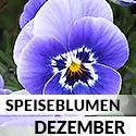 Blüten im Dezember